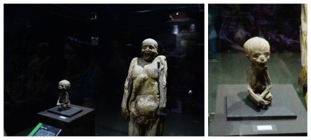 museo-de-las-momias_副本.jpg